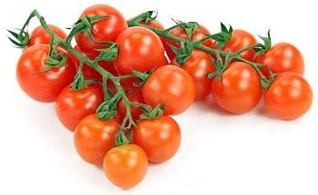 tomate hidroponico