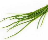 plantar ervas aromaticas